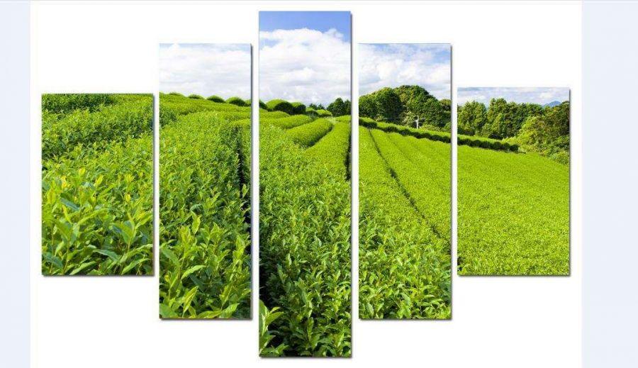 Модульная картина Чайная плантация