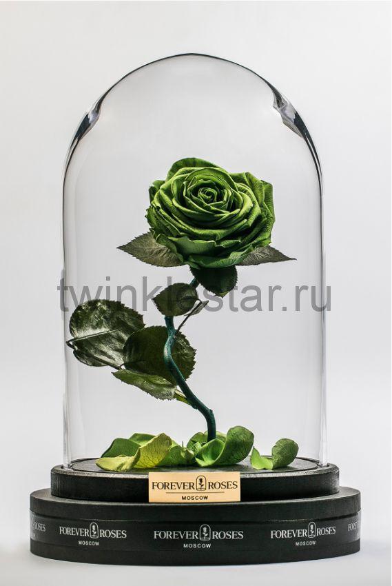 Роза в колбе (зеленая) на изогнутом стебле, 33 см