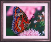 CA 102. Бабочка-2 А3 (набор 800 рублей) Butterfly