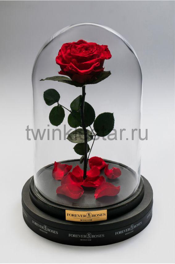 Роза в колбе (красная) на прямом стебле, 33 см