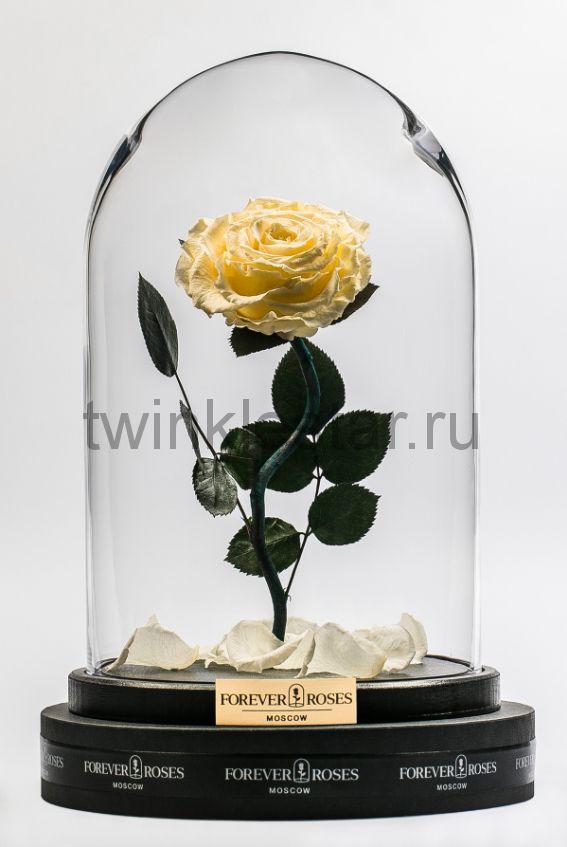 Роза в колбе (кремовый) на изогнутом стебле, 33 см