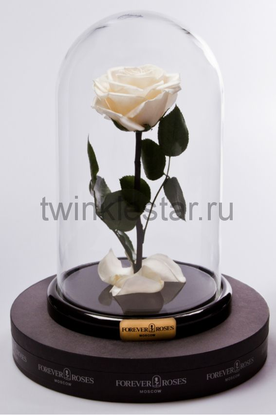 Роза в колбе (кремовый) на прямом стебле, 27 см