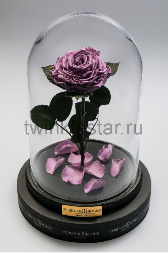 Роза в колбе (сиреневая) на прямом стебле, 33 см