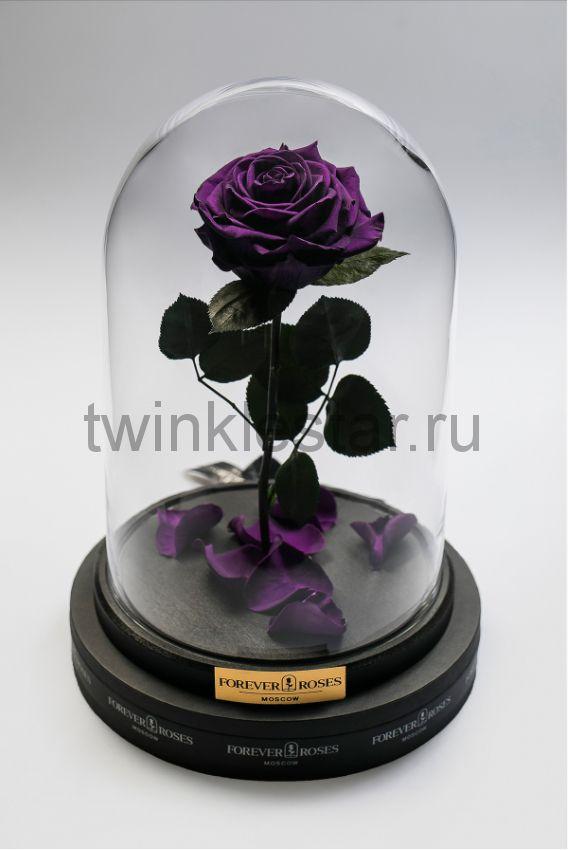 Роза в колбе (фиолетовая) на прямом стебле, 27 см