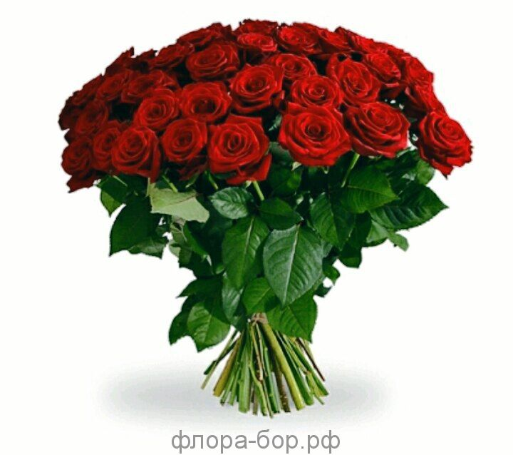 Розы ред наоми 11 шт