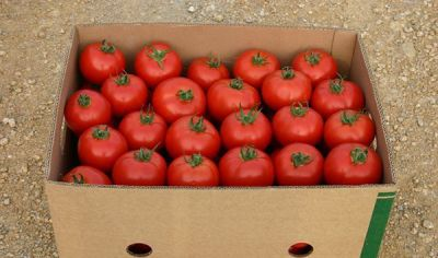 "Купить томат ""Аксиома"" F1 (10/50 семян) от Nunhems"
