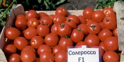 """Купить томат """"Солероссо"""" F1 (20/100 семян) от Nunhems"""