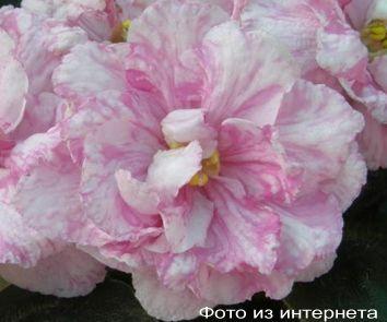 Мраморная роза (С.Фарбитник)