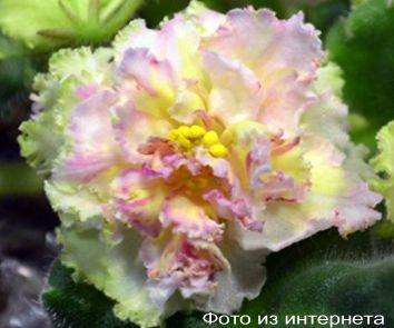 ЛЕ-Масленица (Е.Лебецкая)