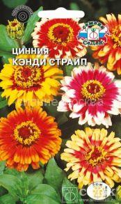 Семена циннии Канди Страйп хризантемовидная, смесь