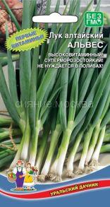 Лук алтайский Альвес (Уральский Дачник)