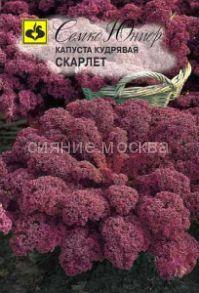 Капуста листовая Скарлет (Семко)