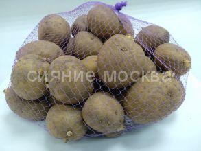 """Семенной картофель Элита """"Гала"""",2 кг."""