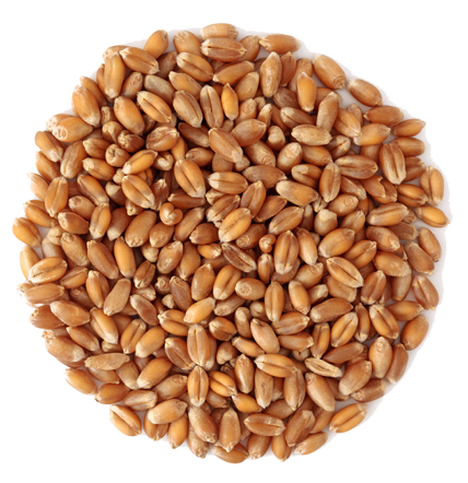 Пшеница зерно, кг