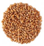 Пшеница купить в СПб