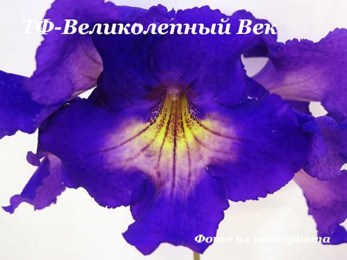 ТФ-Великолепный Век  НОВИНКА