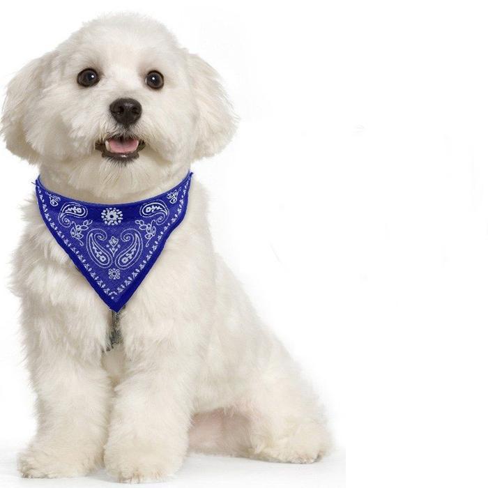 Ошейник-бандана для собак Лапки, 30-48 см, Цвет Синий