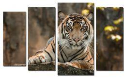 Внимание тигра
