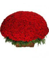 1001 роза