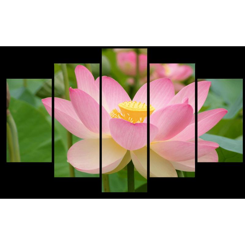 Модульная картина Розовая кувшинка