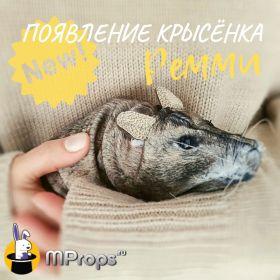 """Интерактивный фокус """"Появление Крысёнка Ремми"""""""