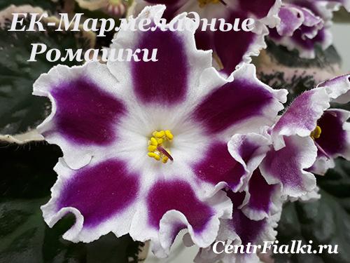 ЕК-Мармеладные Ромашки (Е.Коршунова)  НОВИНКА