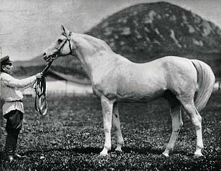 Horse Box от Florian. Дерзкий Цилиндр