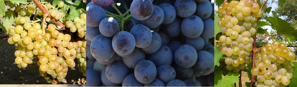 комплект крымский винный
