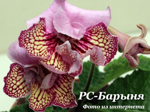РС-Барыня (С. Репкина)