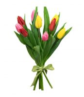 КП 9 тюльпанов