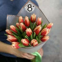 Тюльпаны 19 шт (красно-белые)