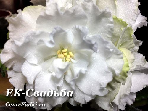 ЕК-Свадьба (Е.В. Коршунова) НОВИНКА
