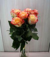 7 роз - Кабарет (60 см)