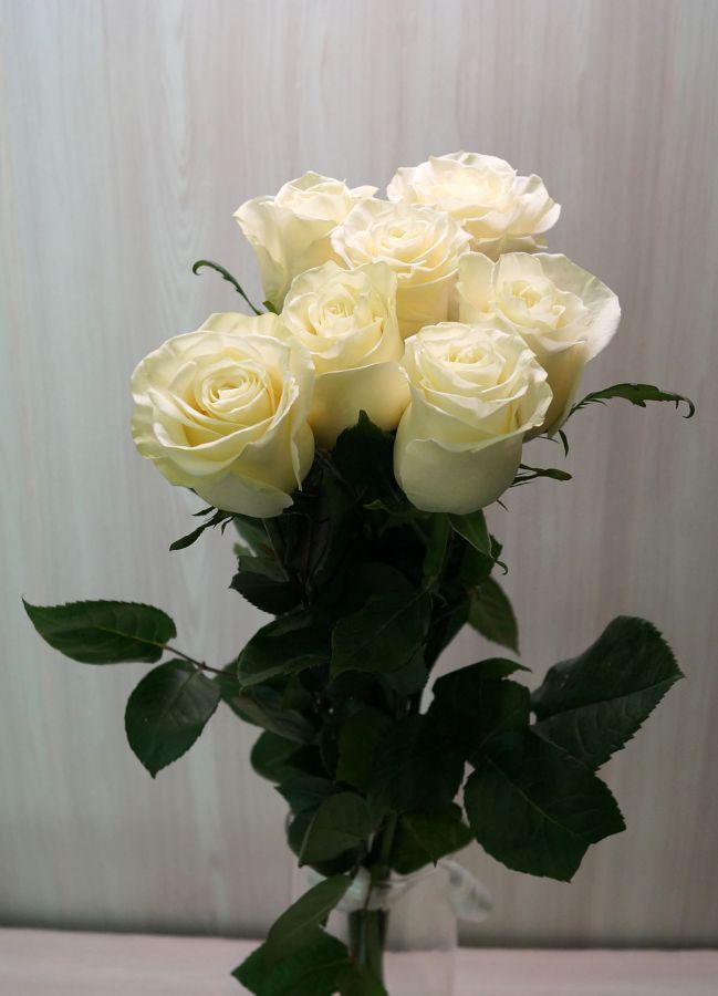 7 роз - Мондиаль (60 см)