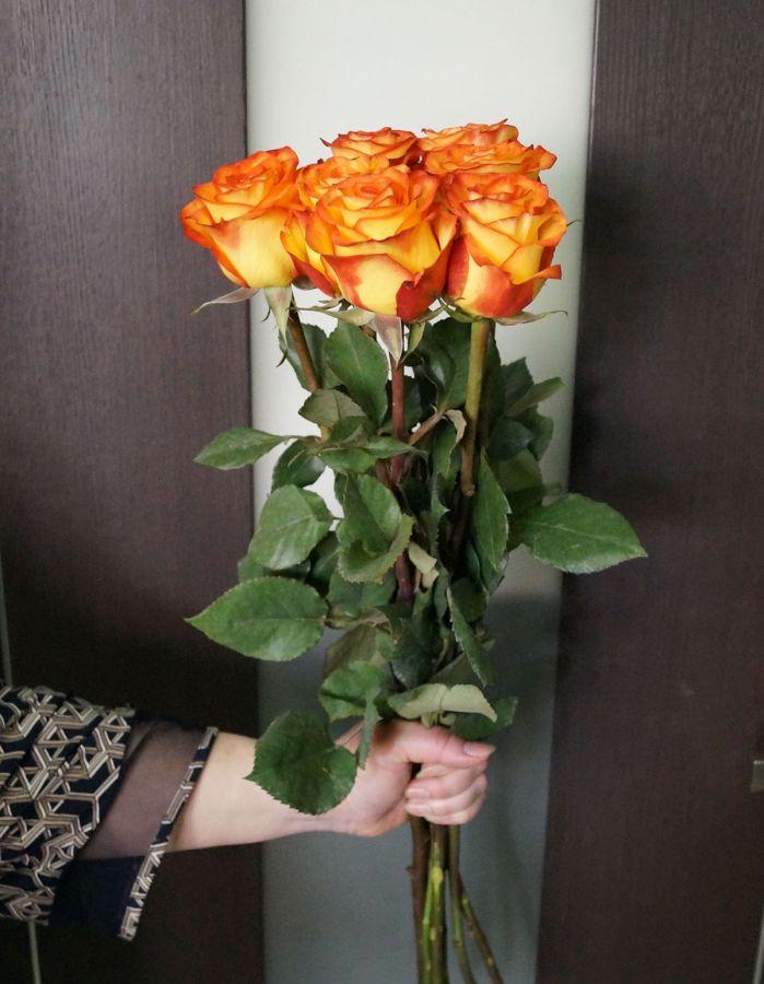 7 роз - Хай меджик (60 см)