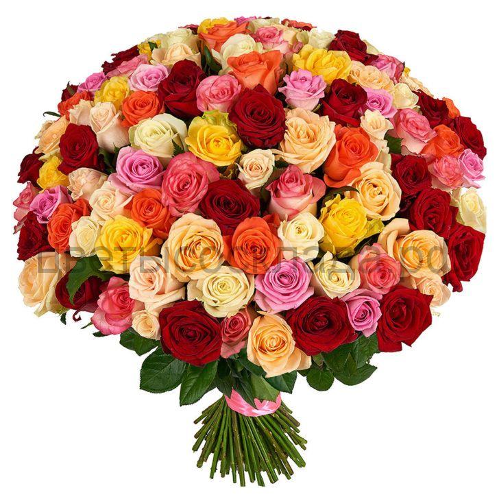 Розы Россия микс 2