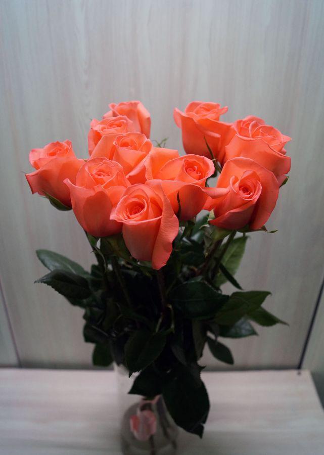 11 роз - Мувистар (60 см)