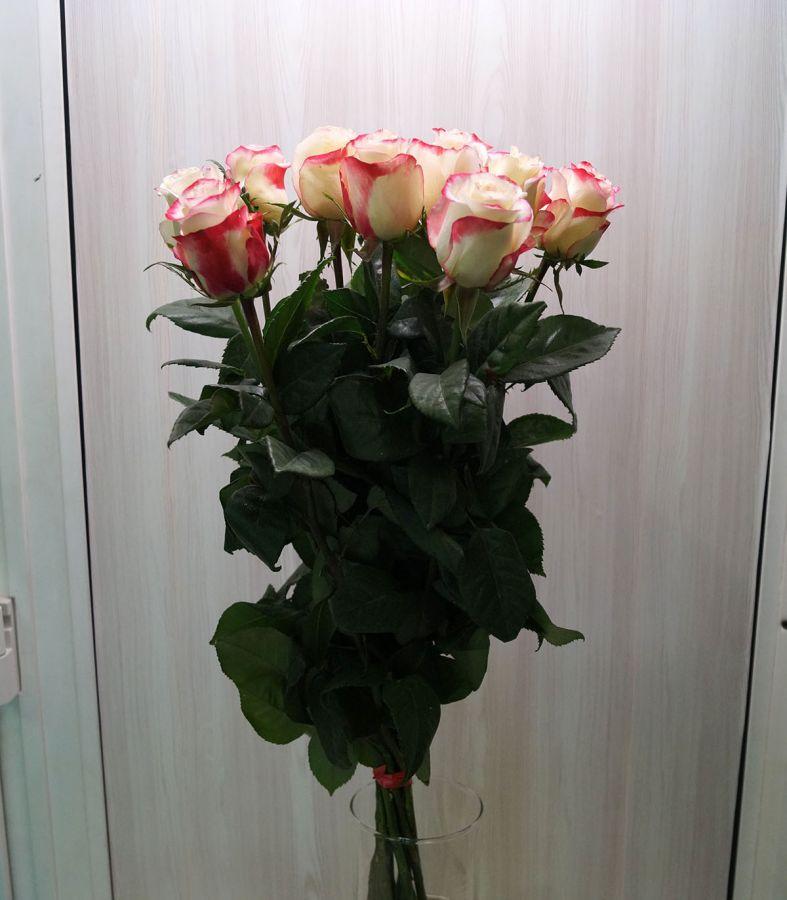 11 роз - Свитнес (60 см)