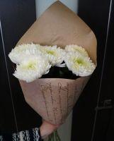 Хризантемы одноголовые
