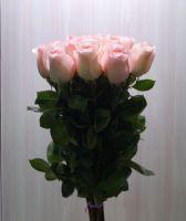 15 роз - София (60 см)