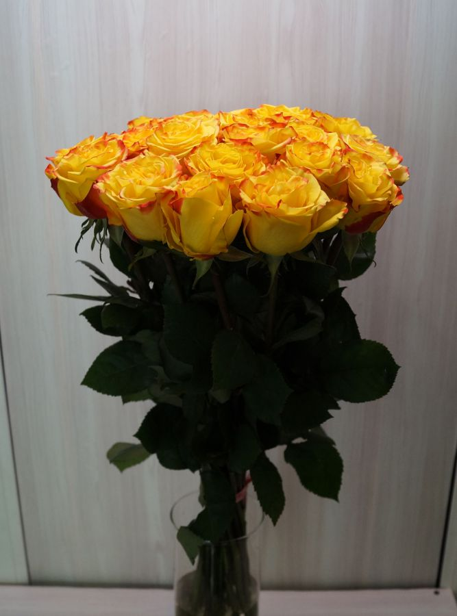 25 роз - Хай еллоу (60 см)