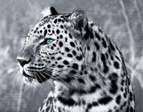 "Алмазная мозаика ""Леопард"" 30х40 см."