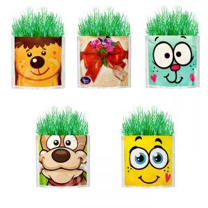 Растущий подарок, трава в упаковке МИКС