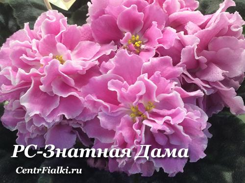 РС-Знатная Дама (С.Репкина)