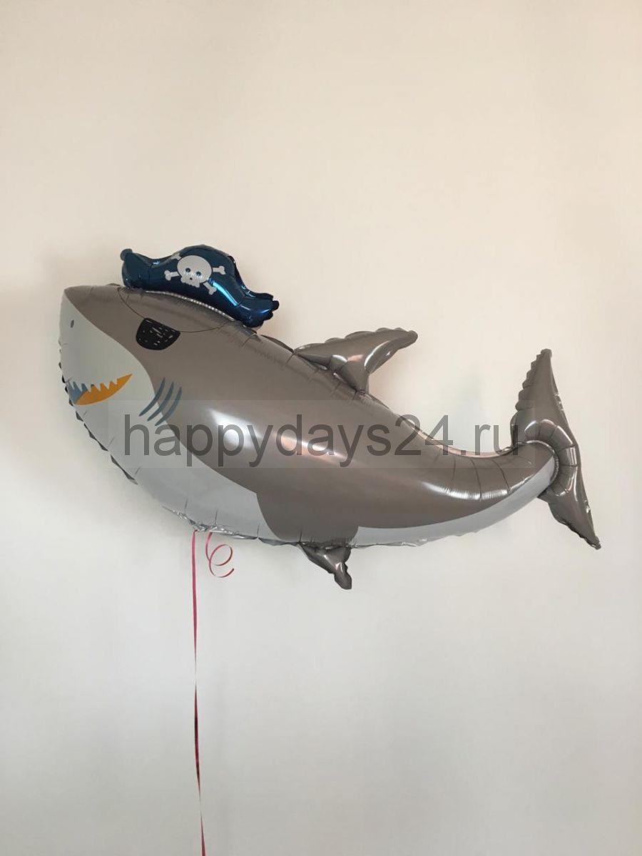 Акула - пират