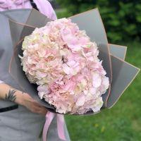 Монобукет из розовых гортензий