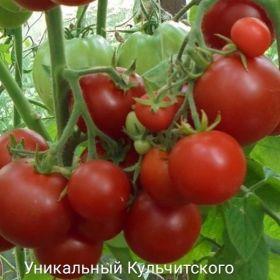 """Томат """"Уникальный Кульчитского"""""""