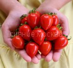 Tomat-Balkonnye-serdechki-F1-Premium-sids1