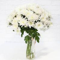 11 кустовых белых хризантем Балтика
