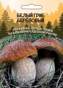 Белый гриб Березовый (Уральский Дачник)